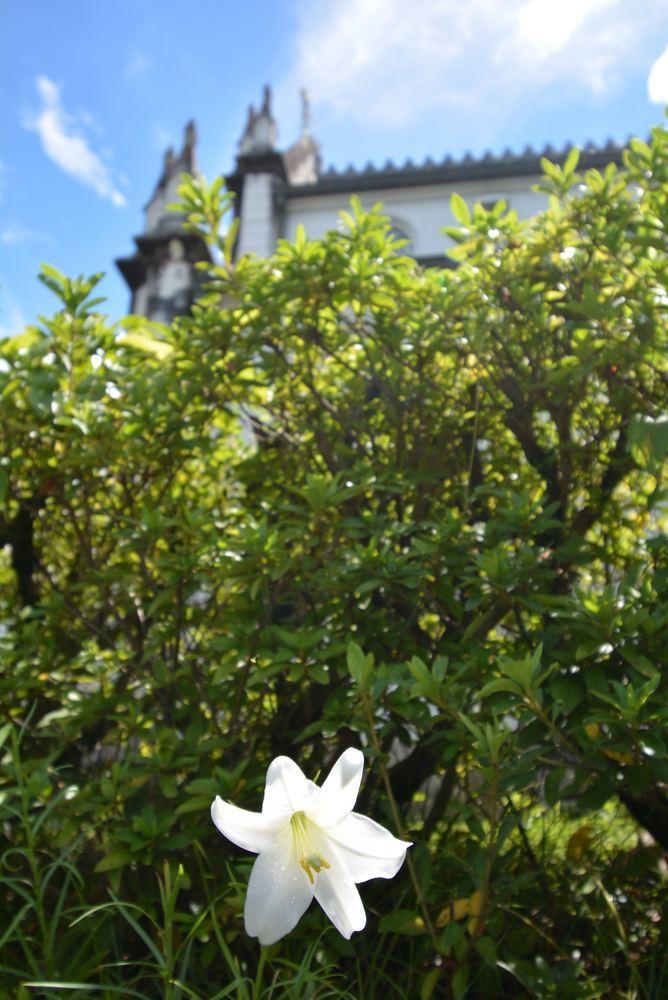 聖ザビエル天主堂とシロユリ_e0373930_19324518.jpg