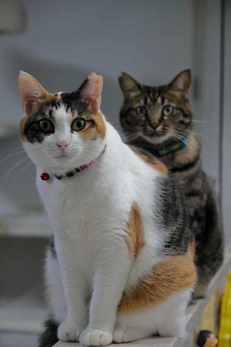 百日紅とスキンと猫シャンプー_f0083400_16101943.jpg