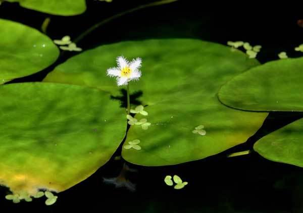 庭の花_c0404426_15493924.jpg