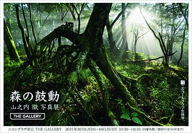 山之内 徹「森の鼓動」(東京)_c0142549_14353681.jpg