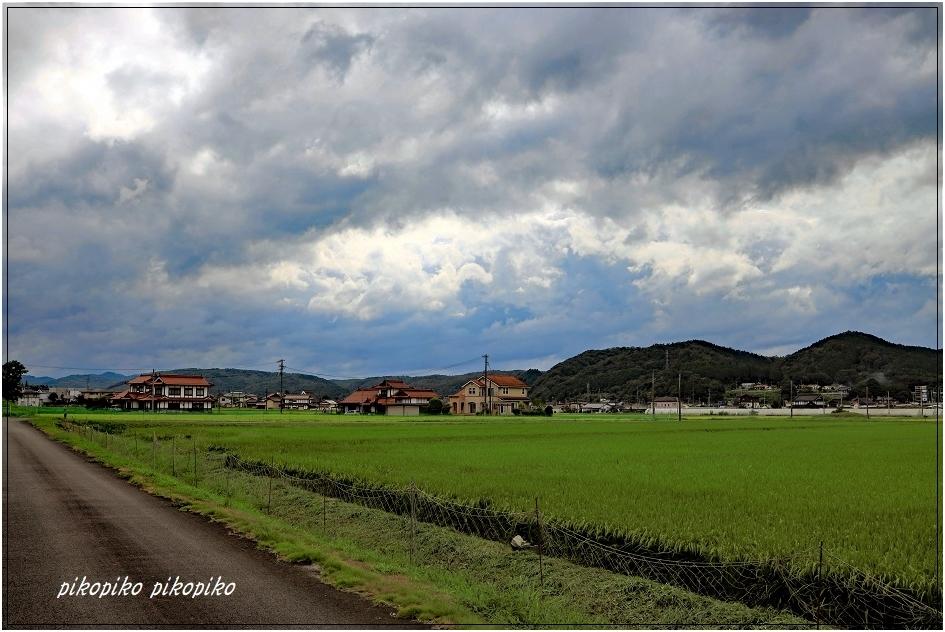夏の終わりの向日葵_e0353681_23100221.jpg