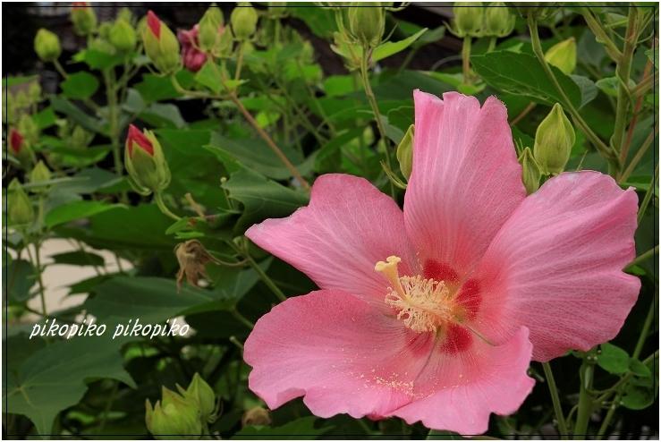 夏の終わりの向日葵_e0353681_23454504.jpg