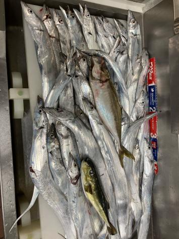 駿河湾凪、タチウオ入れ食い。_f0175450_03450647.jpg