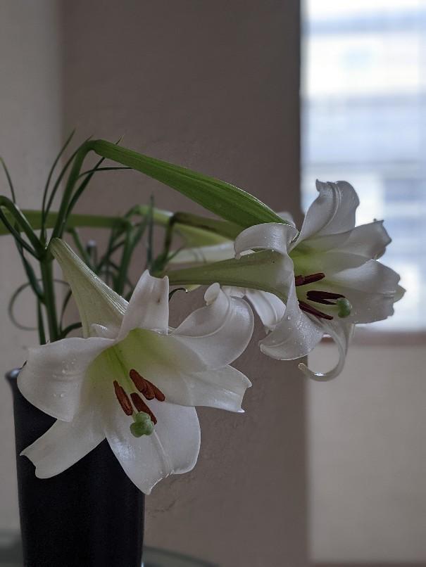 白と緑と_b0289206_14240439.jpg