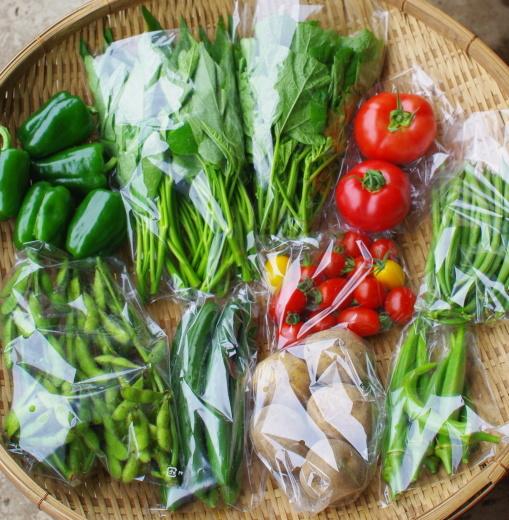 今週の野菜セット(8/24~8/28着)_c0110869_13215954.jpg