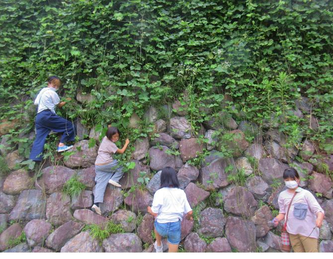 2021・初夏の草木染め_f0211514_14313221.jpg