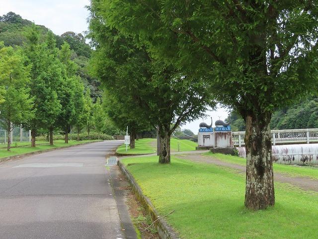大白公園散策(その1)(撮影:8月23日)_e0321325_14152202.jpg
