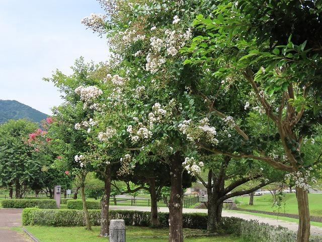 大白公園散策(その1)(撮影:8月23日)_e0321325_14183511.jpg