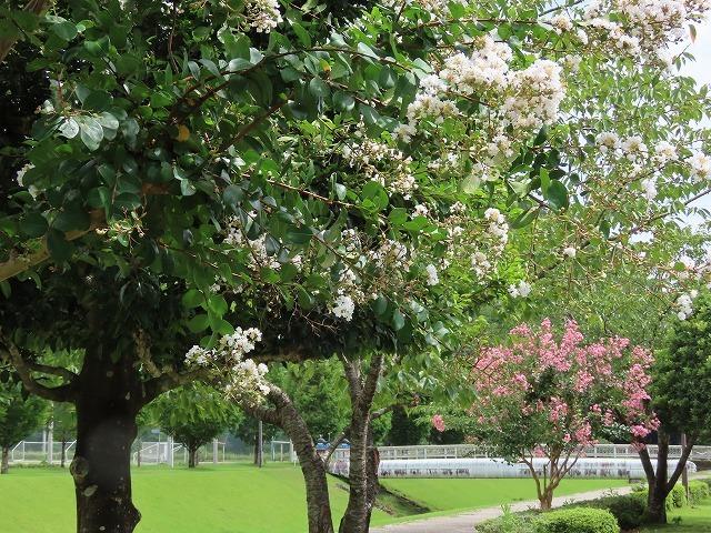 大白公園散策(その2)(撮影:8月23日)_e0321325_14301676.jpg