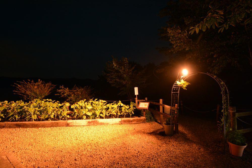 夜のヒマワリ_e0373930_20581459.jpg