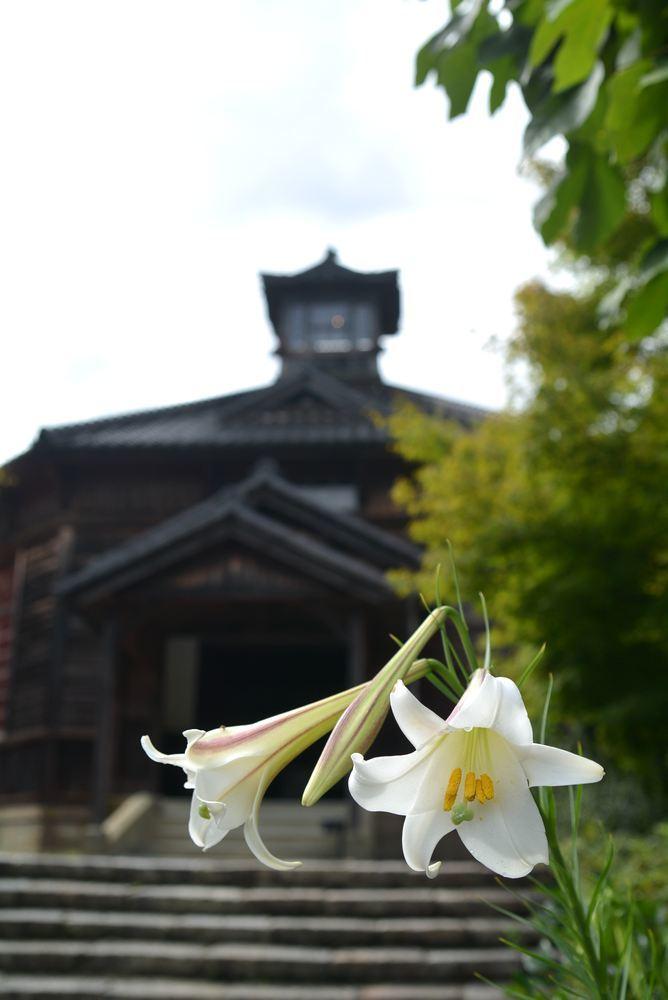 金沢監獄とシロユリ_e0373930_19423019.jpg