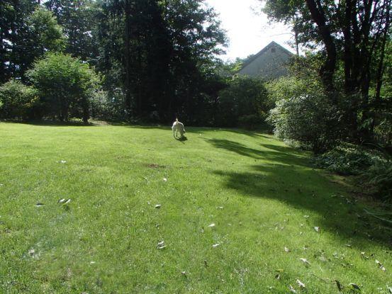 12歳にしてボール遊びを覚えた元盲導犬_f0064906_12132947.jpg