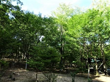 企業の森活動日記 サーラエナジー㈱ サーラの森_d0105723_20290034.jpg