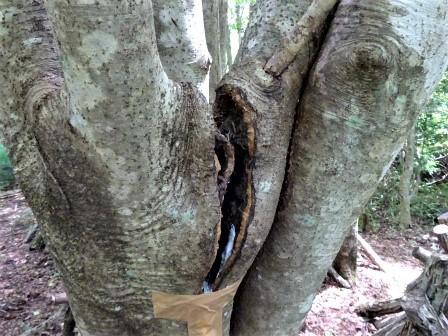 企業の森活動日記 サーラエナジー㈱ サーラの森_d0105723_20291087.jpg