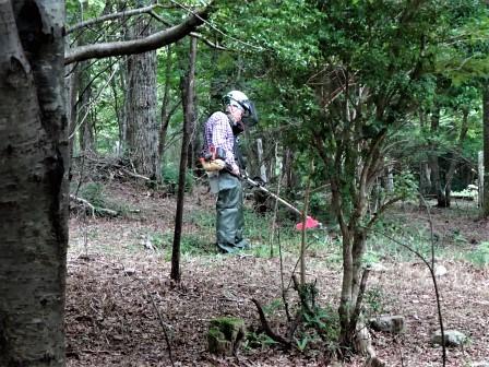 企業の森活動日記 サーラエナジー㈱ サーラの森_d0105723_20293884.jpg