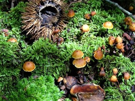企業の森活動日記 サーラエナジー㈱ サーラの森_d0105723_20301881.jpg