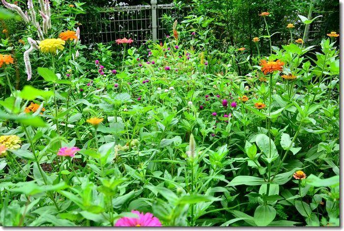 8月の庭_d0089358_20122319.jpg