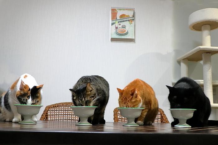 ちいさな猫のメロディー♪_f0083400_21081952.jpg