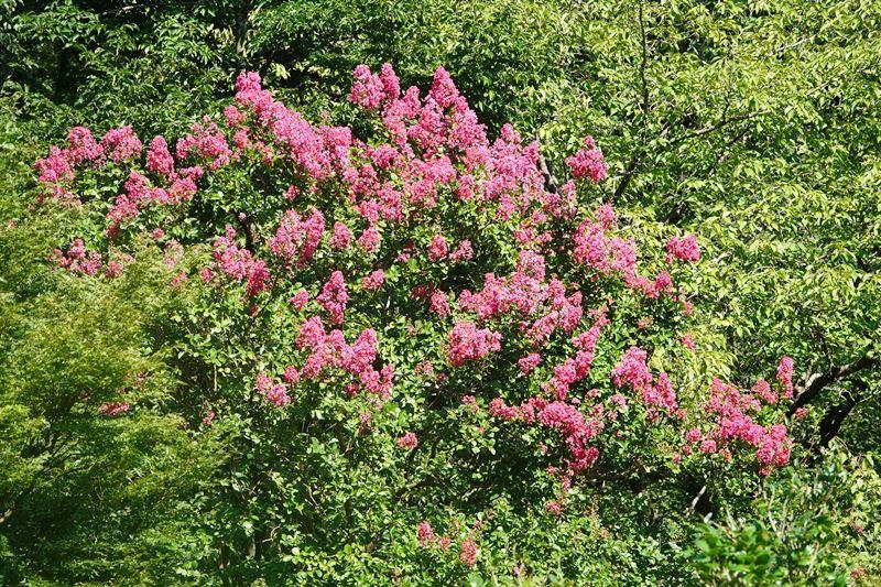 野鳥トレ268 神戸森林植物園_b0227552_18383290.jpg