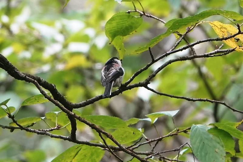 野鳥トレ268 神戸森林植物園_b0227552_18392006.jpg