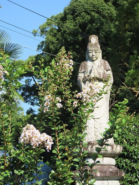 金剛寺の百日紅の花_e0321325_14364771.jpg