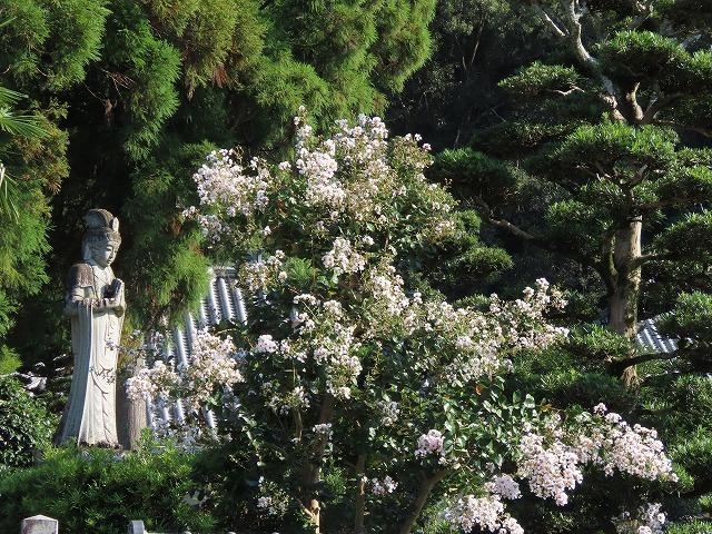 金剛寺の百日紅の花_e0321325_14374632.jpg