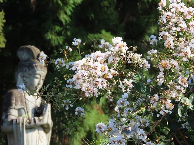 金剛寺の百日紅の花_e0321325_14380121.jpg
