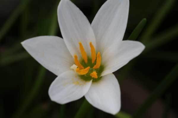 庭の花_c0404426_20075744.jpg
