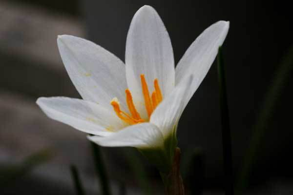 庭の花_c0404426_20082889.jpg