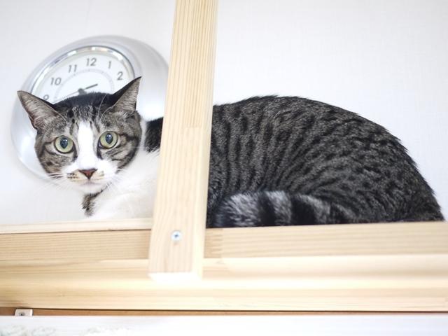 猫のお留守番 ぎんちゃん編。_a0143140_21394506.jpg