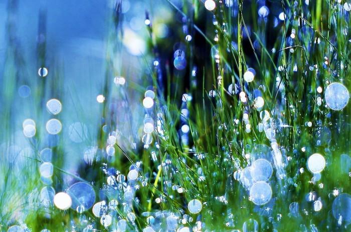 草に宿る光_c0067690_05070597.jpg
