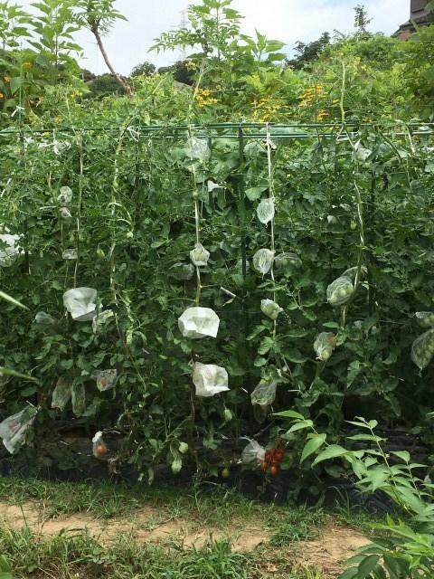 家庭菜園とスマホのあれやこれや_c0067690_06062775.jpg
