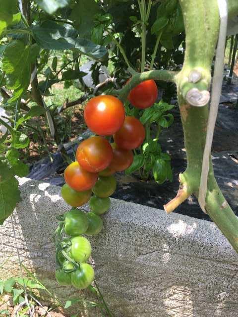家庭菜園とスマホのあれやこれや_c0067690_06100006.jpg