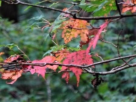 みんなの森活動日記_d0105723_17173443.jpg