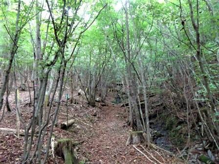 みんなの森活動日記_d0105723_17180249.jpg