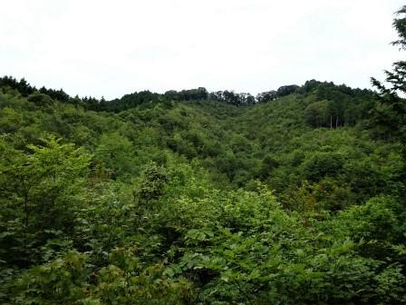みんなの森活動日記_d0105723_17180946.jpg