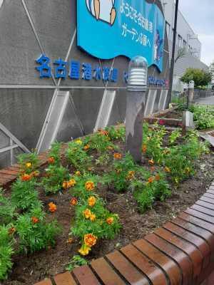 ガーデンふ頭総合案内所前花壇の植替えR3.8.23_d0338682_09580004.jpg