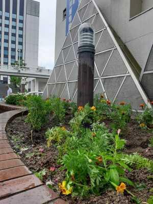 ガーデンふ頭総合案内所前花壇の植替えR3.8.23_d0338682_10021689.jpg