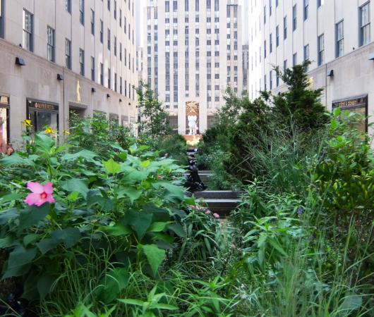 新しい夏のニューヨークの風物詩?、ロックフェラー・センターの「砂場」_b0007805_05412004.jpg