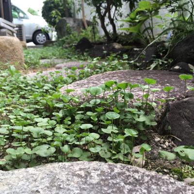 苔と蓑虫の話_d0214221_07545465.jpg