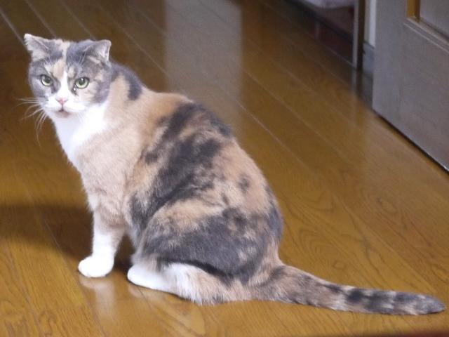 猫のお留守番 マミちゃん編。_a0143140_16454623.jpg