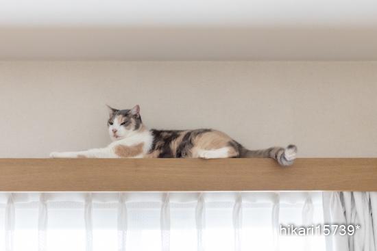 猫たちには日々夢中♡_e0364523_18100369.jpg