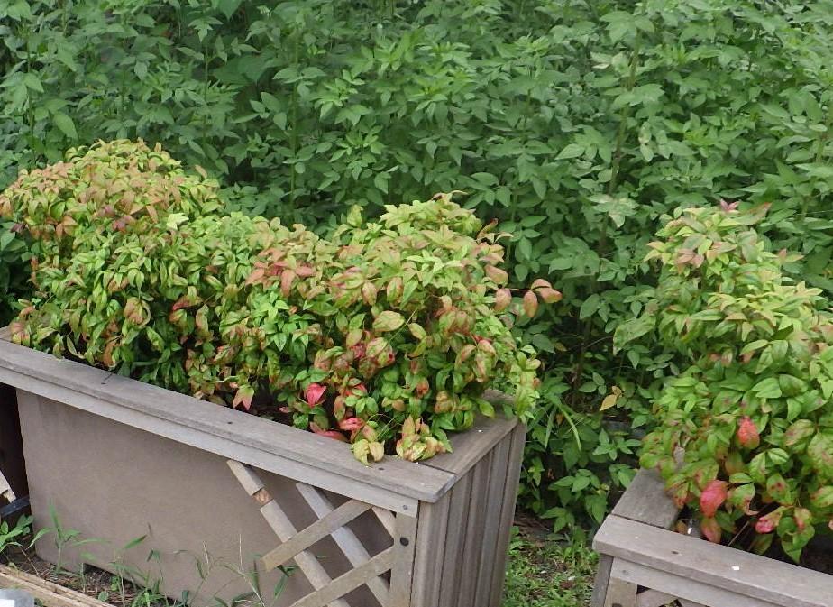高台広場のプランターに花を植えました🌺_e0412531_13160465.jpg