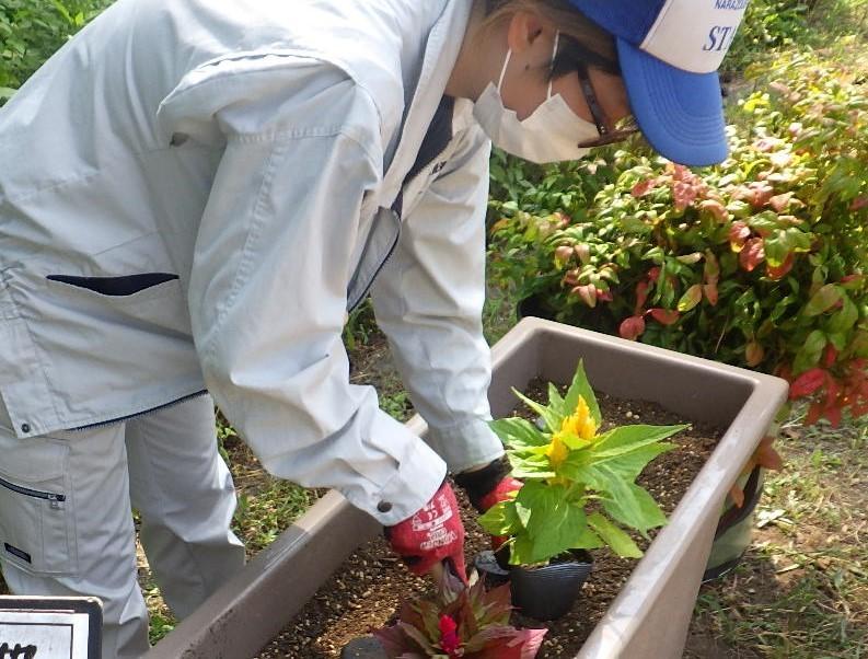 高台広場のプランターに花を植えました🌺_e0412531_13161033.jpg