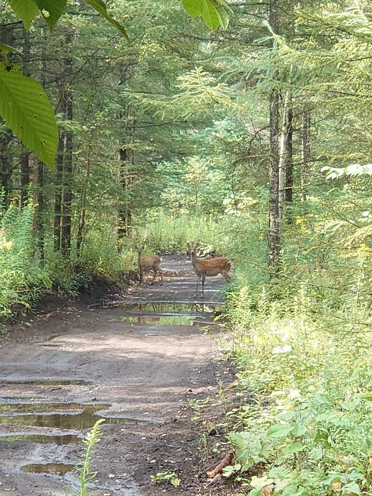 林間コースと桂コース_e0183255_00333362.jpg