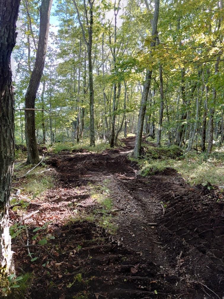 林間コースと桂コース_e0183255_00344839.jpg