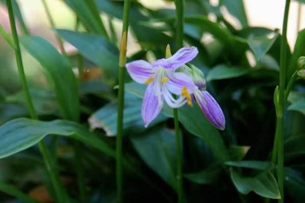 庭の花_c0404426_19490861.jpg