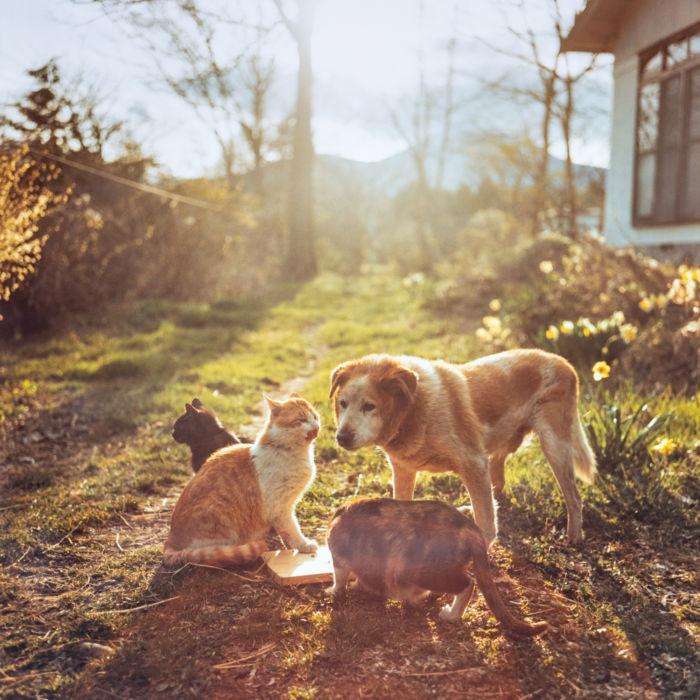 奥山淳志氏 写真展「動物たちの家」_b0187229_15322494.jpg
