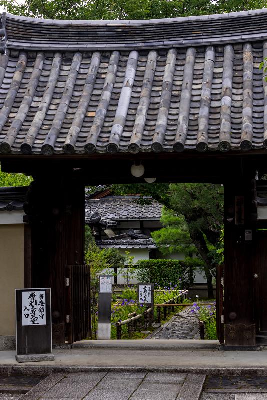 禅居庵の桔梗たち_f0155048_23082714.jpg