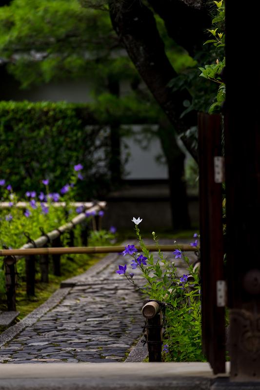 禅居庵の桔梗たち_f0155048_23083740.jpg